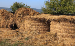 Haystacks. Storage with a pile of haystacks Stock Photography