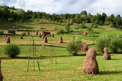 Haystacks. Several haystacks in a beautiful green environment stock photo