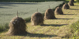Haystacks. On the edge of a field of oats, July evening Royalty Free Stock Photos