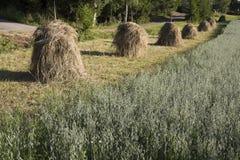 haystacks Zdjęcie Royalty Free