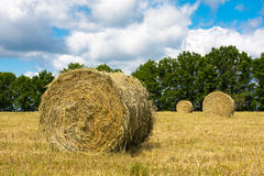 Haystacks Royalty Free Stock Image