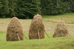 Haystacks Royalty Free Stock Photo