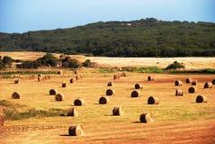 haystacks Image stock