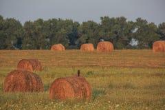 haystacks imagem de stock royalty free