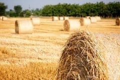 haystacks foto de stock royalty free