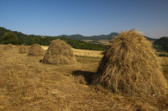 Haystacks in the agricultural land Royalty Free Stock Photography
