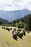 Haystacks along Pustertaler Hohenstrasse, Austria. Mowed grass is collected in hayricks for drying against agricultural slopes along the Pustertaler Hö Stock Image