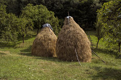 Haystacks. Animal food ,stocked for winter royalty free stock image