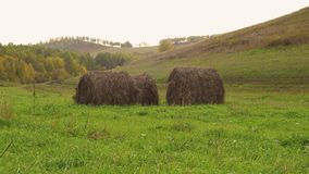 Haystacks on an Autumn Field. Rural landscape in the fall. Harvest time. Haystacks on the field stock photo