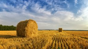 Haystacks in autumn field, rural, Russia, Ural Royalty Free Stock Photo