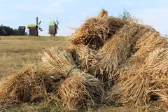 Haystacks. On the background of the mill Royalty Free Stock Photos