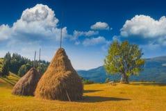 Haystacks in a Carpathian summer valley Royalty Free Stock Photo