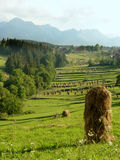 Haystacks of the chamfered hay early morning in the Polish mountains Stock Photography