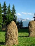 Haystacks of the chamfered hay early morning in the Polish mountains Royalty Free Stock Image