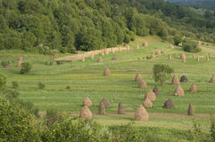 Haystacks in a clearing 021 Stock Images