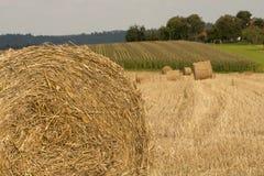Haystacks on cornfield Stock Image