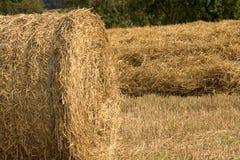 Haystacks on cornfield Stock Photography