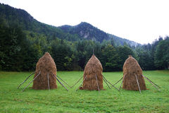 Haystacks in the countryside Royalty Free Stock Image