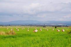 Haystacks in Croatia Royalty Free Stock Images