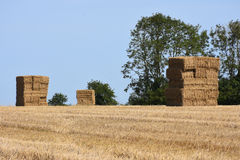 Haystacks in Cropped Wheat Field Stock Photos