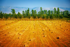 Haystacks on dry field Royalty Free Stock Photos