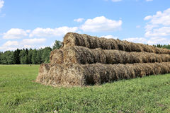 Haystacks on the farm in field Royalty Free Stock Photo