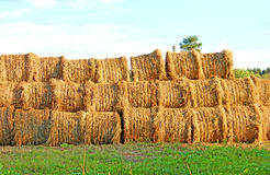 Haystacks on the farm Stock Images