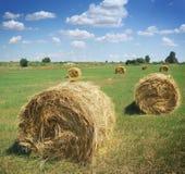 Haystacks on the field Royalty Free Stock Photo