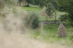 Haystacks in field, Apuseni Mountains, Romania Royalty Free Stock Image