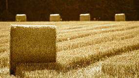 Haystacks on field Royalty Free Stock Photo