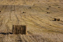 Haystacks. In the field autumn Royalty Free Stock Images