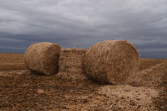 Haystacks in a field. On a background of a stormy sky Stock Photo
