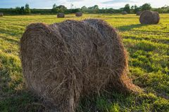 Haystacks in a field Stock Photo