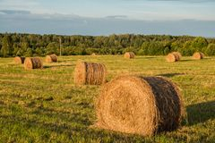 Haystacks in a field Stock Image