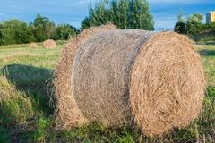 Haystacks in a field Royalty Free Stock Image