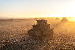 Haystacks on the field at dawn Stock Photo