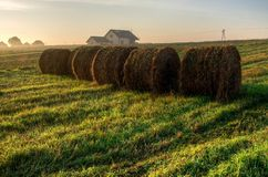 Haystacks on the field in early morning. Royalty Free Stock Photo