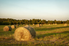 Haystacks in a field Royalty Free Stock Images