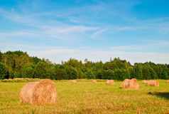 Haystacks in a field Stock Photography