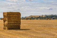 Haystacks at Harvest Time. Haystacks in a field in Kent, on a sunny summer`s day stock photo