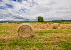 Haystacks on the field Royalty Free Stock Image