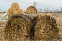 Haystacks on a field Stock Photography