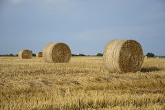 Haystacks in a field. Round haystacks on a green field royalty free stock images