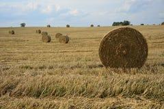 Haystacks in a field. Round haystacks on a green field Stock Photos