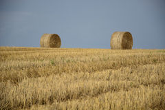 Haystacks in a field. Round haystacks on a green field royalty free stock image