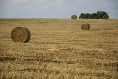 Haystacks in a field. Round haystacks on a green field Stock Photo
