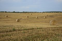 Haystacks in a field. Round haystacks on a green field Stock Photography