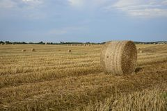 Haystacks in a field. Round haystacks on a green field Stock Image