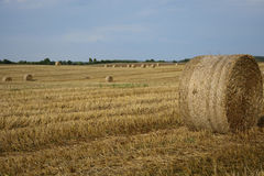 Haystacks in a field. Round haystacks on a green field stock images