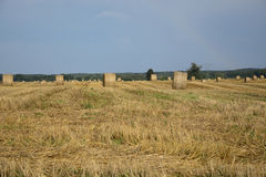 Haystacks in a field. Round haystacks on a green field Royalty Free Stock Photography